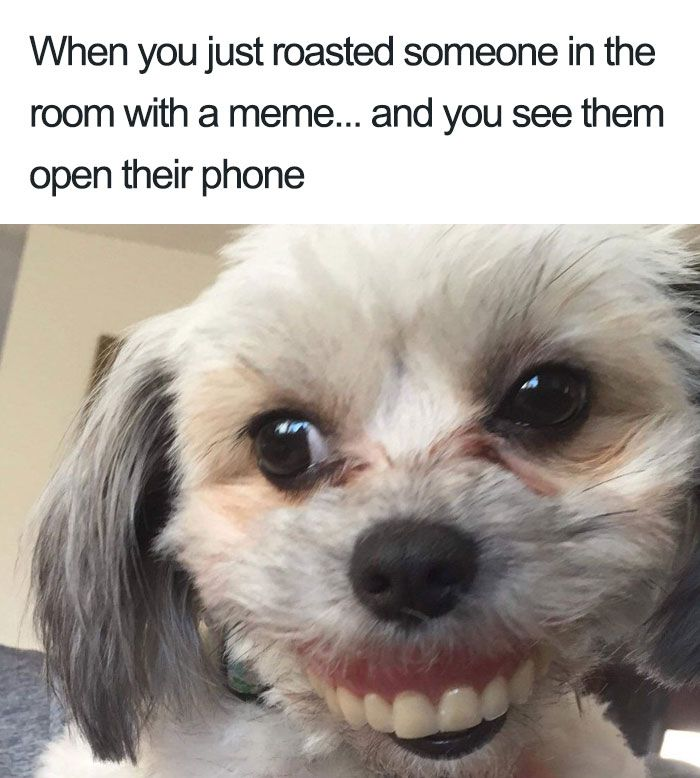 35 Of The Happiest Animal Memes To Start The Week With A Smile