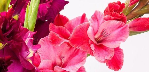 Confira o significado destas 30 flores antes de dar uma de presente