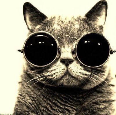 steampunk cats | steampunk cat | Tumblr | Steampunk cats