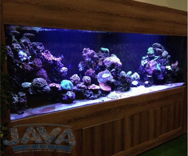dekorasi aquarium air laut di jakarta