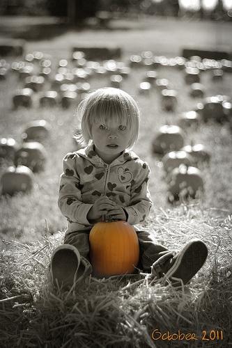#pink pumpkin patch