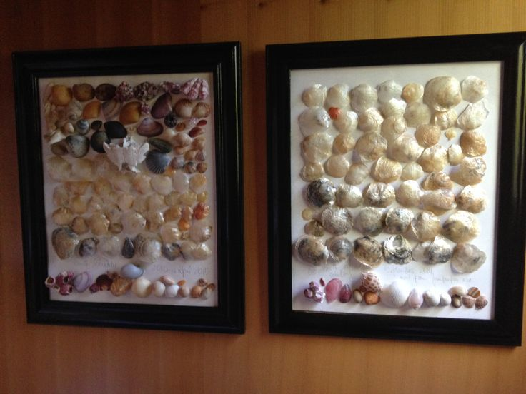 #framed #shells #marine #artwork #handmade #ocean #sand #beach #collection #colour #color #JanetBailey