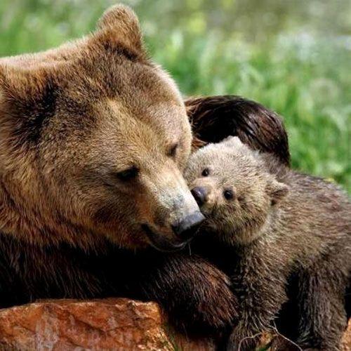 Mamma-e-figlio-orso.jpg (500×500)