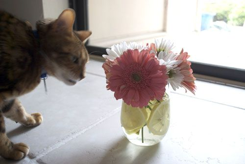 DIY Daisy Wedding Centerpieces :  she got vases from Michaels ($ 3 each), but you could do better with pint mason jars, less than $ 1 each http://www.myonlineweddinghelp.com/search.php?keywords=pint+mason+jars