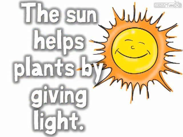 Needs of a Plant (song for kids) - Harry Kindergarten