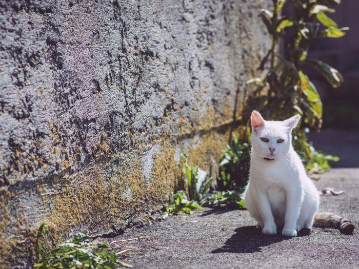 Katze in Bremen (Hohentengen, Baden-Württemberg)