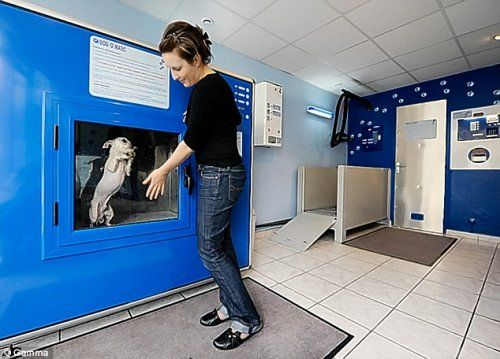 Стиральная машина для собак