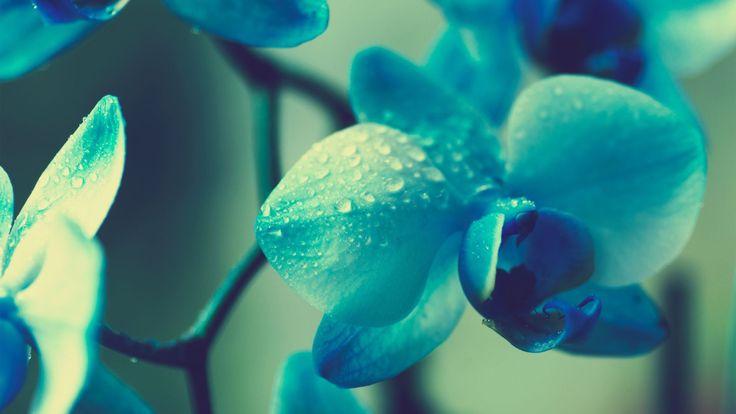 Flowers Blue Beautiful
