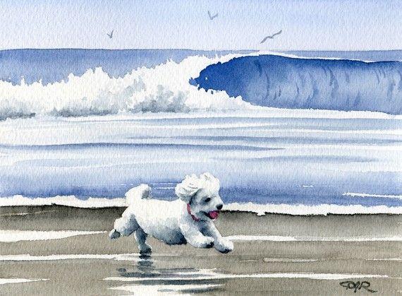 BICHON FRISE en la impresión del arte del perro de playa firmado por artista D J Rogers