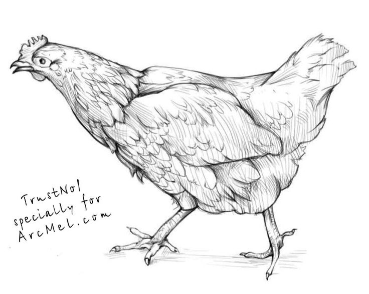 How to draw a hen step 5
