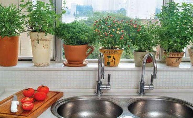As melhores plantas para cada cômodo da casa: http://www.ecycle.com.br/component/content/article/67-dia-a-dia/2961-as-melhores-plantas-para-cada-comodo-da-sua-casa.html