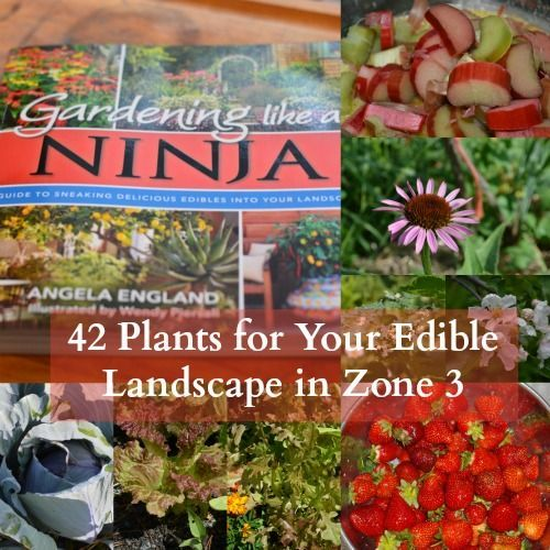 Garden Design Zone 3 135 best (taf) edible landscaping images on pinterest | urban