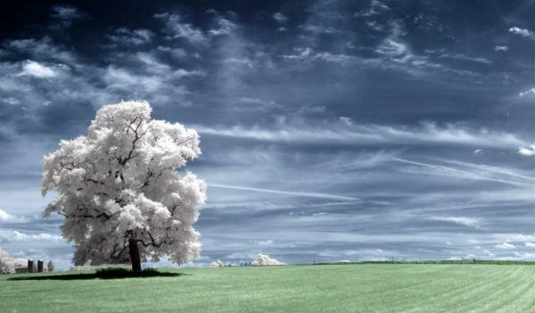 fotografia luz infravermelha onirico
