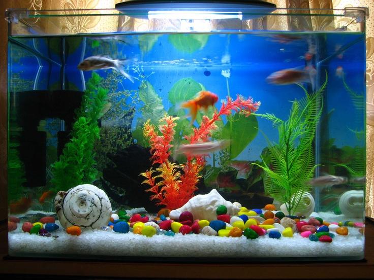 exotic fish tanks | Tropical Fish, Aquarium with Flash.. , India, Beaches, Rivers, Water ...