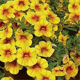 10 id es propos de jardini res d 39 t sur pinterest for Grandes jardinieres exterieures