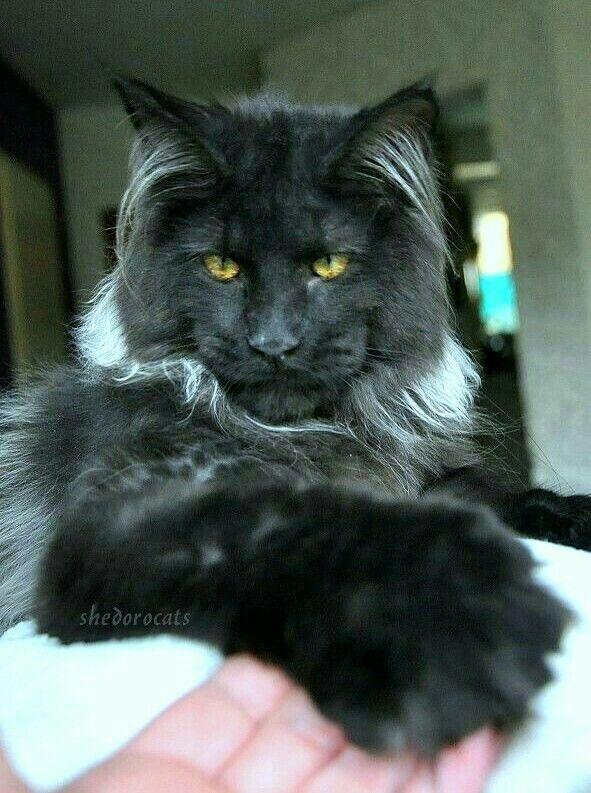 Pin On Big Cats