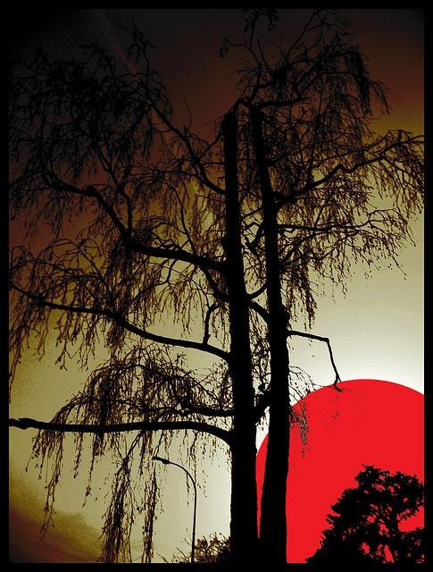 Haiku by Cirano, via Flickr