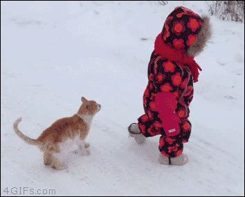 is it ok that This Cat Totally Body Slams A Kid Into The Snow?
