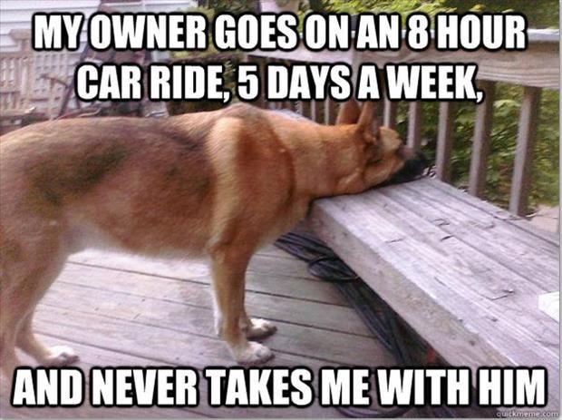 Top 20 First World Dog Problems
