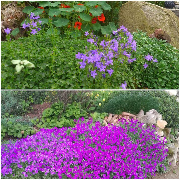 Skalniaczki w moim ogrodzie. /   Rock gardens from my garden .Autorstwa Ewa Rutkowska