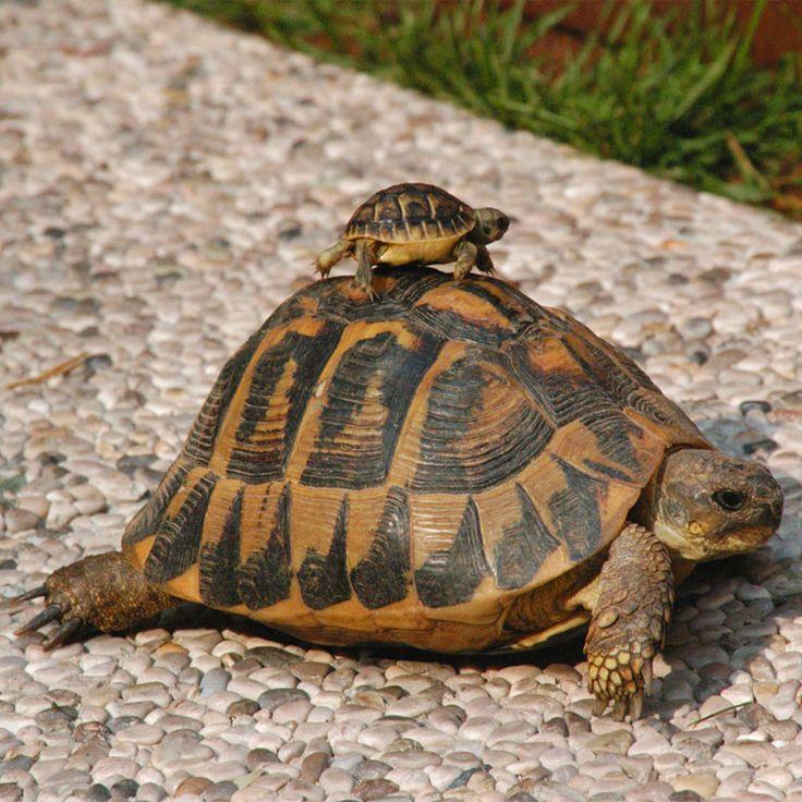 Frasi sulle tartarughe
