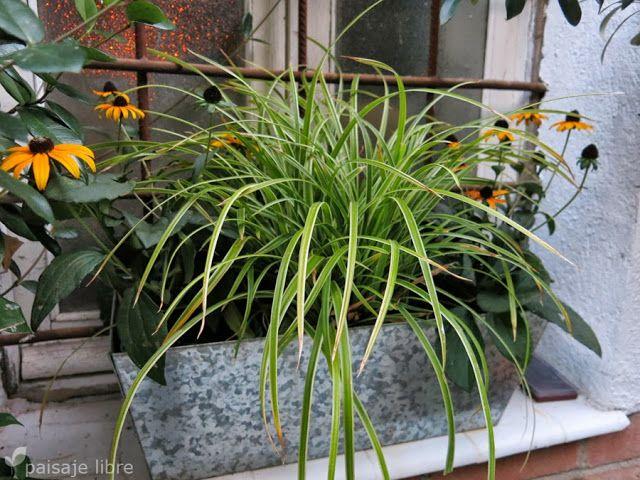 Plantas de otoño http://www.paisajelibre.com/2013/10/party-garden-shopper-paisajista.html