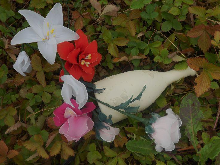 rosa  di filanca