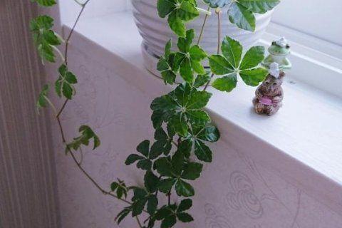 トイレにおすすめの観葉植物8選 風水や置き方 育て方のコツは Horti ホルティ By Greensnap 風水 植物 観葉植物 風水