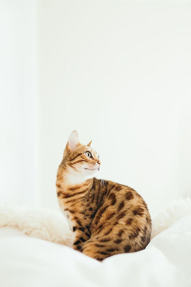 7 Great Ways to Keep Your Indoor Cat Active & Healthy