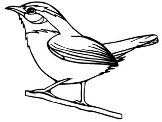 Simple Drawing Of Carolina Wren From Bird Themed Coloring Pages
