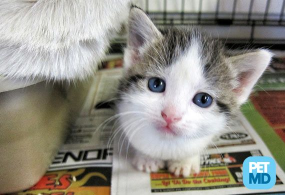 6 Things You Should Never Do When Adopting A Cat Kitten Adoption