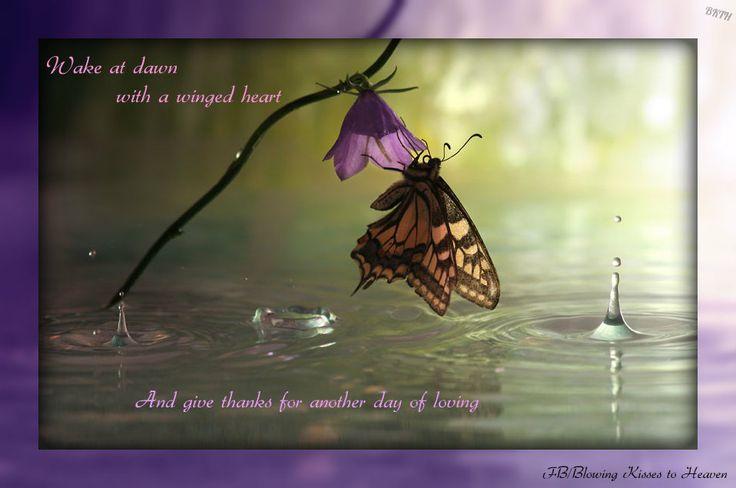 butterfly heaven wallpaper - photo #30