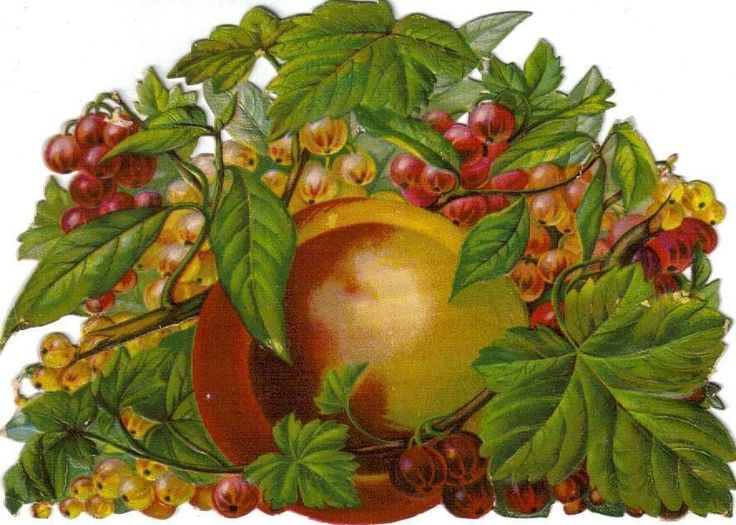 Larger Victorian Die Cut scrap Still Life Fruit & Berries c1880