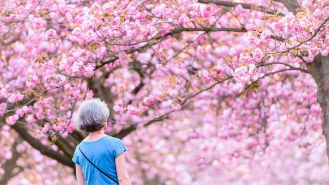 The Most Beautiful Spots To See Cherry Blossoms In Paris Beautiful Spots Cherry Blossom Blossom