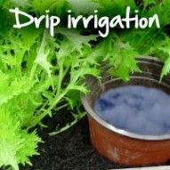 Free irrigation for your garden using recycled materials- A slide show. From MOTHER EARTH NEWS magazine.