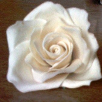 beautiful withe rose