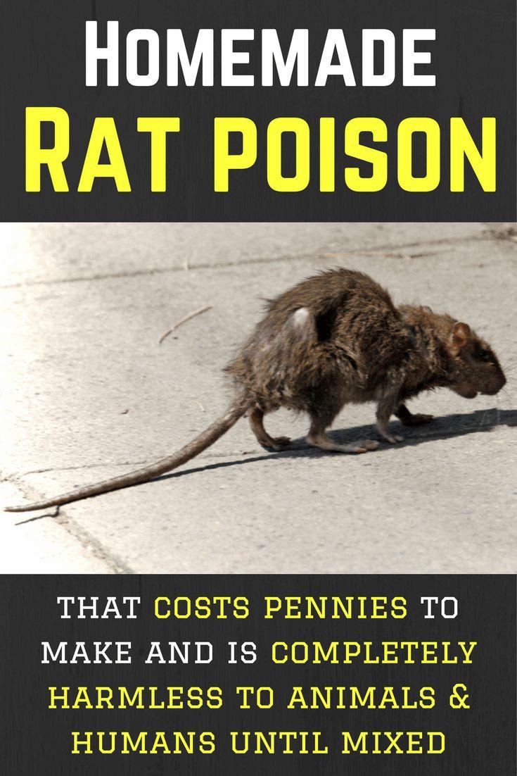 Diy rat poison recipe cheap simple 100 safe until