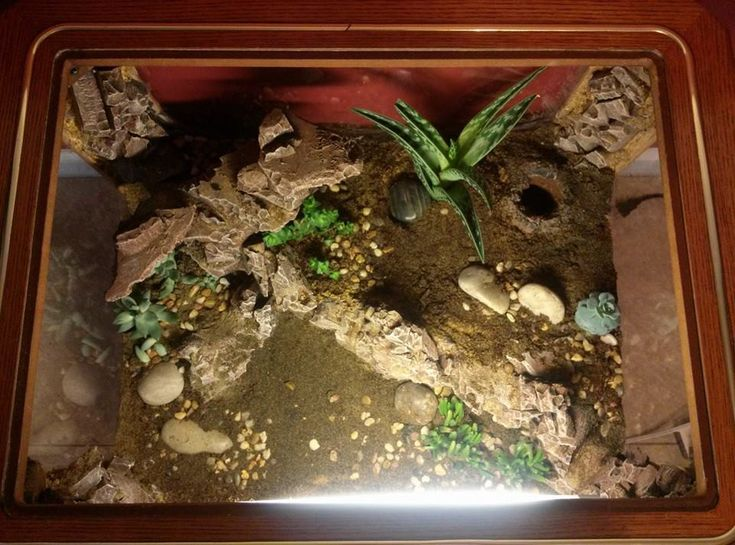 1000 images about reptile on pinterest gecko terrarium leopard gecko habitat and reptile. Black Bedroom Furniture Sets. Home Design Ideas