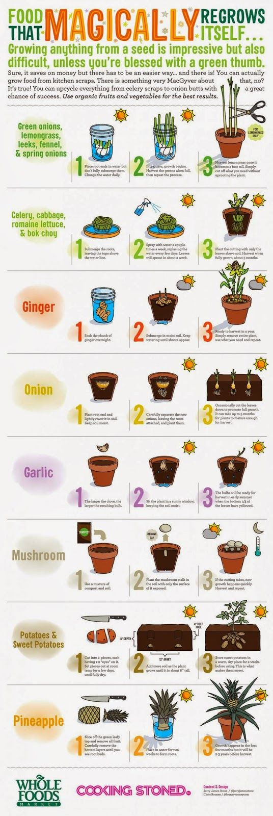 Food-That-Magically-Regrows-Itself.
