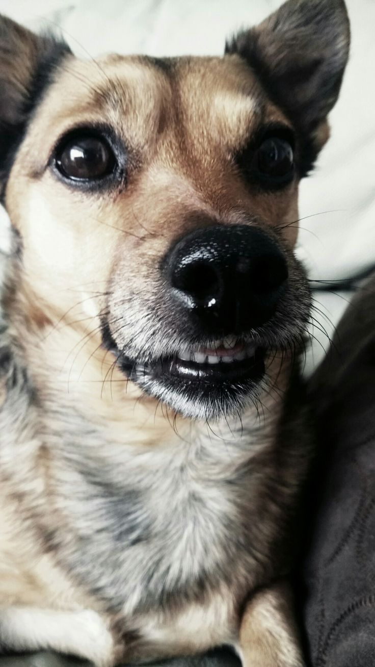 What a smile from Dara the jack russell mix. Say cheese!!