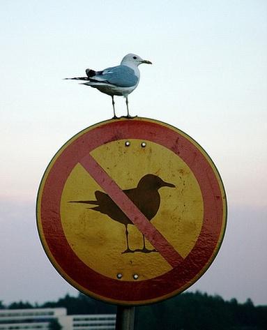 Irreverent bird