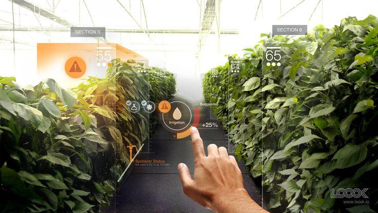 Virtual Reality Companies: Loook, mixed reality company, interviewed | BGR