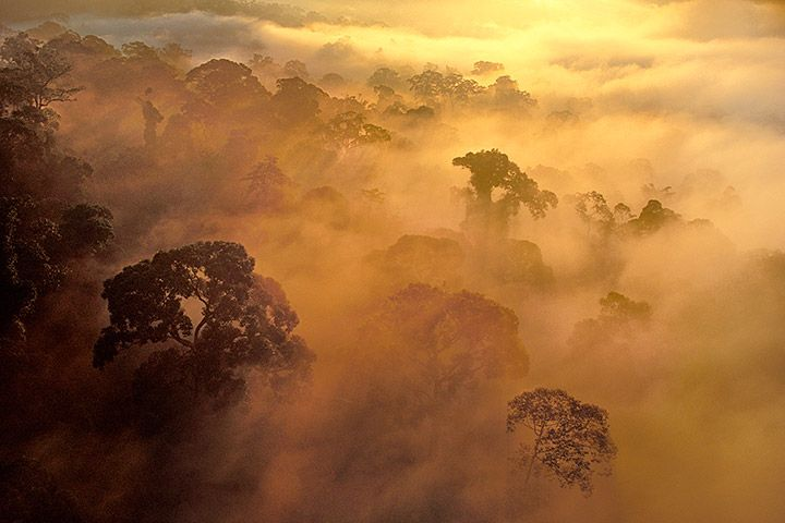 Dawn over Rainforest.  Mist over rainforest, Danum Valley Conservation Area, Borneo.  by Frans Lanting.
