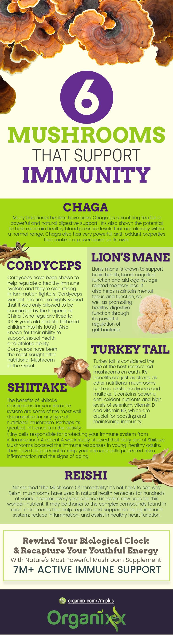 STAYING YOUNG: Rewind your biological clock and recapture your youthful energy. Are you familiar with these 4 mushrooms that support immunity? Reishi, Shiitake, Turkey Tail, Cordyceps, Lions Mane and Chaga Mushroom. Click on the graphic above to read on and discover more about this topic.    How to use medicinal mushrooms   mushroom health benefits   health benefits of mushrooms   #organixx #organixxhealthtips