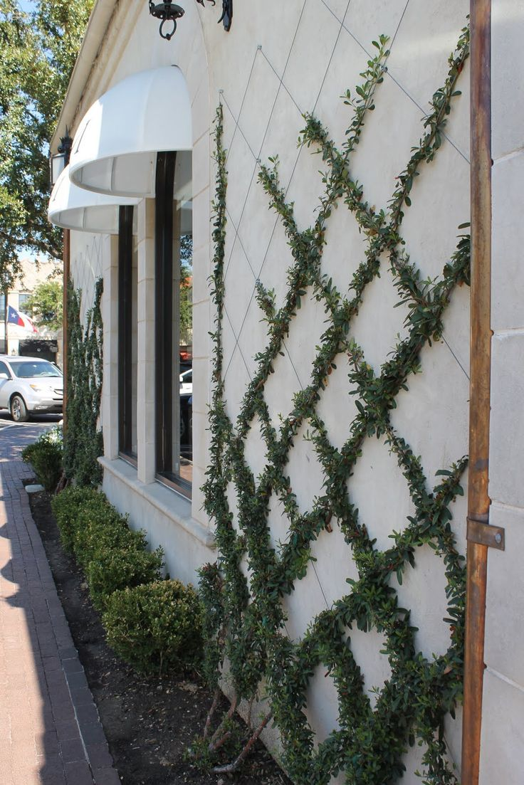 criss cross some wires or thread against the side of the house for a small-leafed ivy trellis. Could probably make an intricate design if you take the time to put the lines just so. [KSPK] :: Photo from Inspired Design: Texas: Simple Ideas for Design Idea for the house foundation walls.