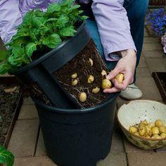 Balkon ideen 2019-Landhaus Blog : Kartoffeln im Eimer pflanzen: eine Idee für Balkon oder Garten#balkon #balkonideen #pflanzen – Moth Art / Motte Kunst