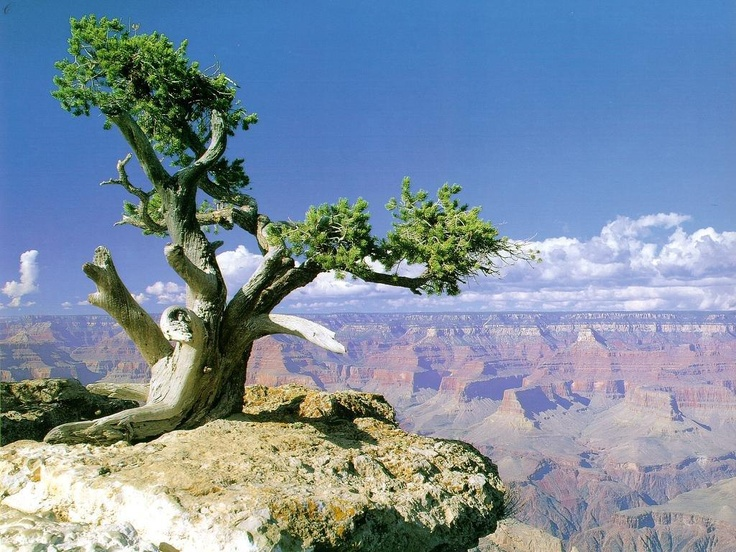 Гранд Каньон — одна из самых глубоких трещин на теле Земли / Гранд Каньон, который находится в штате Аризона, США, по праву считается одним из самых красивых мест на земле. Он является гигантской расселиной, разрезающей землю. Он протянулся почти на пол-тысячи километров, ширина в ...