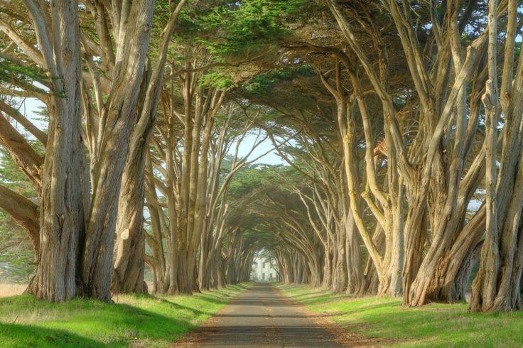 Cypress Tree Road