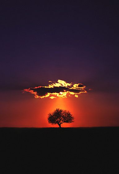 tr3slikes:  tr3slikes:500px / Shine on by Felicia Simion