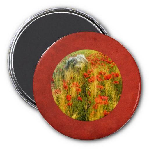 Magnet. Bearded collie Niki running in red poppy field.